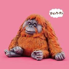 Takara Tomy Panda's ana Zoo Zzz Sleeping Animal Oyasumi P3 Orangutan