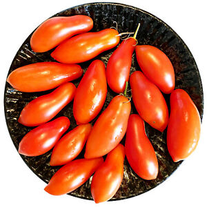 Stabtomate HIMMELSSTÜRMER Tomatensamen 10 Samen Soßentomate