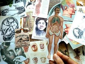 50 Vintage Medical Anatomical Doctor Student Nurse Altered art Junk Journal Card