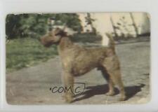 1950 Hood Ice Cream Dogs Irish Terrier 1u6