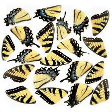 LOT OF 20 CRAFT GRADE YELLOW TIGER SWALLOWTAIL BUTTERFLY WINGS WHOLESALE