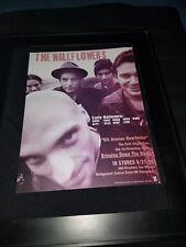 The Wallflowers 6th Avenue Heartache Rare Original Radio Promo Poster Ad Framed!
