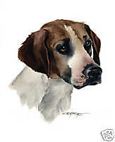 Harrier Dog Painting Art 13 X 17 Large Print by Artist Djr