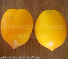 TETON DE VENUS Tomate *Venusbrüstchen Tomaten* 10 Samen