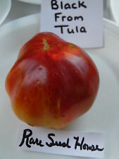 Black From Tula Tomato Seeds! The best taste! Comb. S/H See our store!