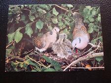 ANIMAUX - carte postale tourterelle des bois (cy69)