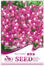 1 Pack 50 Linaria Vulgaris Seeds Toadflax Wild Snapdragon Garden Flowers A245