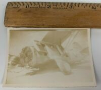 Original WWII Photo USAAF Bomber Plane Fighter Wreckage Aircraft Crash