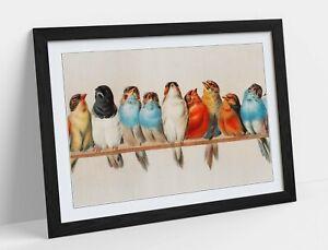 BIRDS ON A PERCH VINTAGE ART -ART FRAMED POSTER PICTURE PRINT ARTWORK- RED BLUE