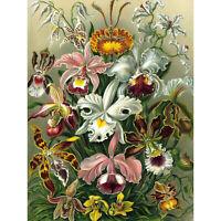 NATURE ART ERNST HAECKEL PLANT FLOWER BIOLOGY GERMANY VINTAGE POSTER PRINT 12x16