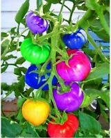 100 GRAINES plantes de tomates arc-en-ciel rares BIOLOGIQUE VEGAN