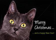 A6 Postkarte Weihnachtskarte schwarze Katze Merry Christmas and a happy new year