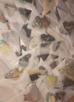 10 BUTTERFLIES MOTHS PAPERED UNMOUNTED WINGS CLOSED WHOLESALE LOT MIX