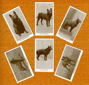 SCHIPPERKE SET OF SIX NAMED DOG COLLECTABLE TRADE CARDS GREAT GIFT
