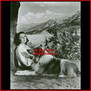 ELIZABETH TAYLOR WITH LASSIE  DOG 1940s PORTRAIT 8X10 PHOTO