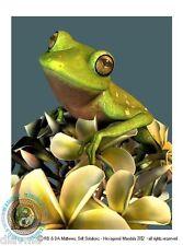 © ART - green tree FROG on frangipani Nature Animal Original Artist Print by Di