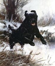 FLATCOATED RETRIEVER DOG FINE ART LIMITED EDITION PRINT