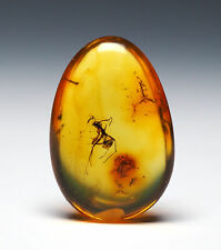 Baltic Amber, Fossil Insect Inclusion, Aculeata, Formicidae (Ant)