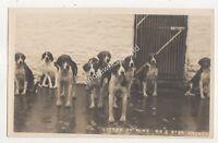 Litter Of Nine Devon & Somerset Stag Hounds RP Postcard Hunting JH German 704b