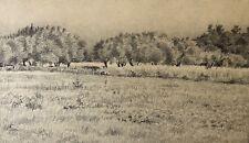 Bollène Les oliviers Ecole provençale XIXe  Provence juin 1903