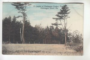 Couple of Century Plants Chebeague Island ME  Tied Boston Electric Show label