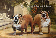 Limited Edition Bulldog Print by Robert May