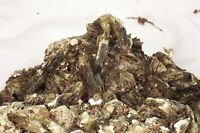 Rare Large Beautiful Red/Brown/Silvery Museum Muscovite Mica Cabinet Specimen