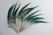 "25 Pcs PEACOCK SWORDS Natural Feathers 10-14"" Craft/Pad/Costume/Halloween/Bridal"