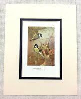 Vintage Uccello Stampa Carbone Cincia Eccezionale Art Thorburn's Ca. 1929