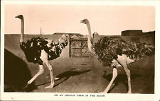 Sudan Unposted Collectable Postcards