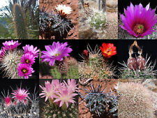 Cactus huge selection of mixed fresh seeds! Collection starter! #8467