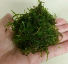Golf ball portion JAVA MOSS Live Aquarium Fish Tank Plant Plants christman xmas