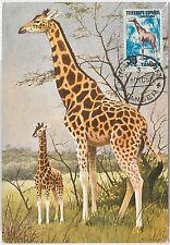 51566  - SPAIN -  POSTAL HISTORY: MAXIMUM CARD - 1956  NATURE: Flowers Doves