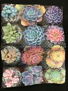 "1000 piece puzzle.  ""Succulents"""