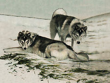 SIBERIAN HUSKY SLED DOG TWO DOGS LOVELY GREETINGS NOTE CARD