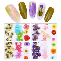 Multi-color Dried Flower Preserved Flowers  Nail Art Decoration Tips DIY
