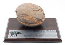 Hadrosaur Genuine Dinosaur Egg Fossil w/ Label #15125 80o