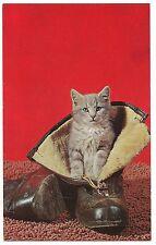 PUSS 'N BOOTS Gray Kitten IN Shoe CAT Postcard Tiger Stripe Tabby Red Background