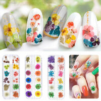 3D 12 Colors Real Dry Dried Flower for UV Gel Acrylic Nail Art Tips Decoration