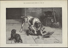 COLLIE WITH PUPS AND THIEVING MONKEY GREATANTIQUE 1884 PART PAGE ENGRAVING PRINT