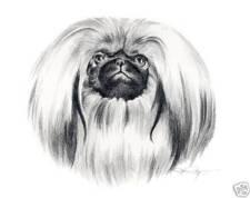 Pekingese Pencil Dog Drawing 8 x 10 Art Print by Artist Djr