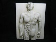 Wall Hanging Sculture of Man Body 1/2 Front & 1/2 Back View on Wood Plaque