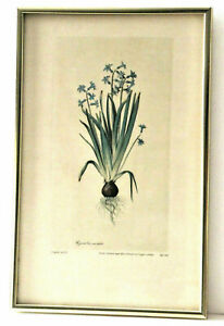 Vintage Botanical Color Aquatint Lithograph after Jacopo Ligozzi's (1547-1627)