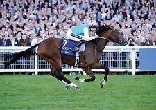 Frankel Horse Racing Legend No POSTER