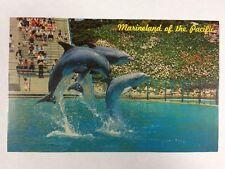 Marineland of the Pacific Atlantic Dolphin, California Chrome Postcard Unused