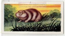 Lemming Small Arctic Rodent Vintage Ad Trade Card