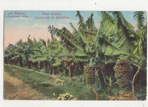 Las Palmas Gran Canaria Spain Platacion De Bananos Vintage Postcard US021
