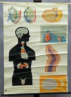 vintage medical rollable wall chart poster, anatomy, inner secretory glands