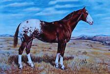 Appaloosa horse  2 Vintage Art