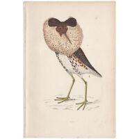 Morris Birds antique 1863 hand-colored engraving print Pl 228 Ruff